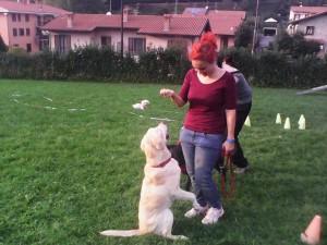 Tranquillity Dog - Centro Cinofilo