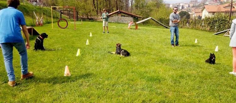 corsi edicazione cane