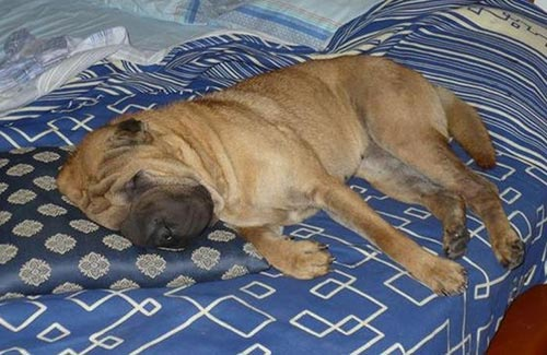 Quando capita che fido un po troppo invadente l 39 allegra cagnara - Educare il cane a non salire sul divano ...