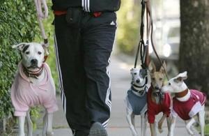 educazione cani bergamo