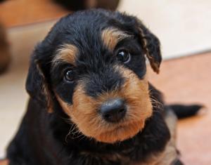 addestramento-cani-e-cuccioli