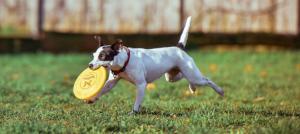 app-gratuita-per-segnalare-bocconi-avvelenati-e-cani-smarriti